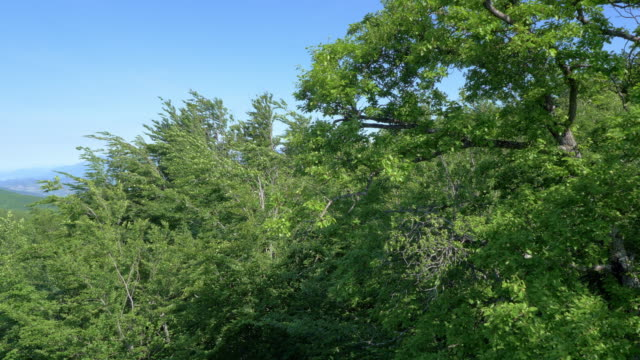 Aerial of tree in a vast forest area video