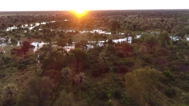 Aerial panning sunrise view over palm trees and waterways of the Okavango Delta video