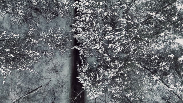 aerial. person walks through a snowy forest video
