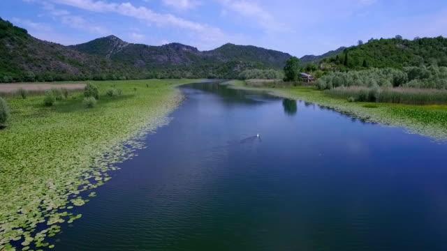 Aerial shooting river with green lilies on water surface. video