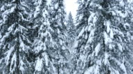Aerial shot amongst the snow covered trees video