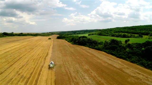 Aerial Shot Combine harvesting a field of wheat video