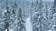 Aerial shot of a forest whitened by snow video