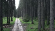 Aerial shot of a road leading through spruce tree forest video