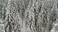 Aerial Shot Of A Snowbound Forest video