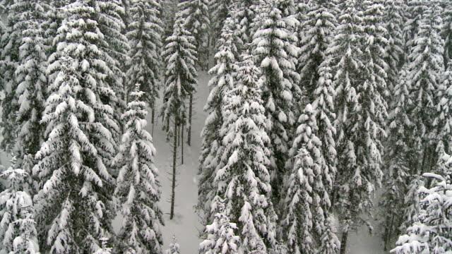 Aerial Shot Of A Snowbound Forest video