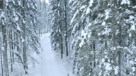 Aerial shot of a snowy forest road video