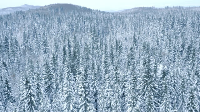 Aerial shot of a vast snow covered forest landscape video