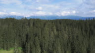 Aerial shot of a vast spruce tree forest area video
