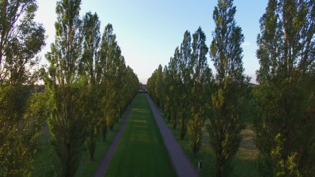 Aerial shot of avenue of trees and promenad walk in park in Malmo, Sweden video