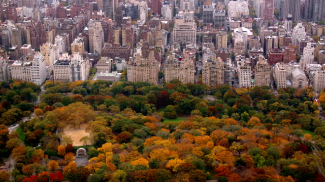 Aerial shot  of Central Park in Autumn color video