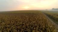 HD: Aerial Shot Of Corn Fields At Dawn video