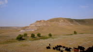 Aerial shot of cows in a badlands pasture video