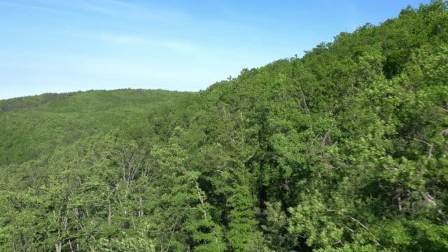 Aerial shot of dense Mediterranean forest video
