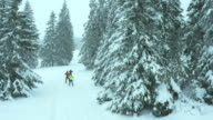 Aerial shot of family on a cross country skiing track video