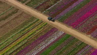 Aerial shot of flower farm, Los Angeles, California video