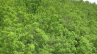 Aerial shot of green treetops video