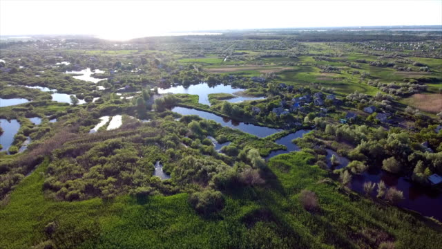 Aerial shot of small lakes and reedbeds with a lot of cane, and rush in Ukraine video