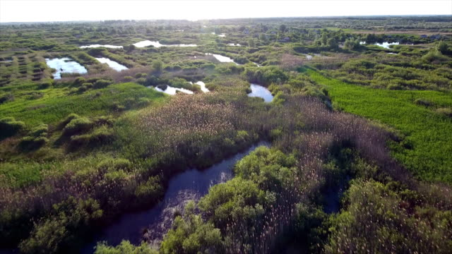 Aerial shot of small lakes and reedbeds with a lot of cane, and sedge in Ukraine video