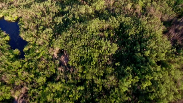 Aerial shot of small pools and  reedbeds with a lot of cane, and rush in Ukrain video