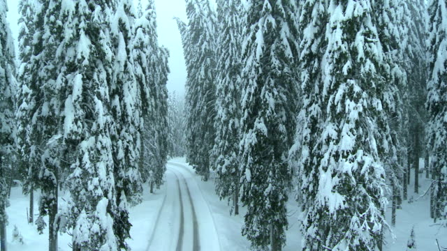 Aerial Shot Of Snowy Road Surrounded With Trees video