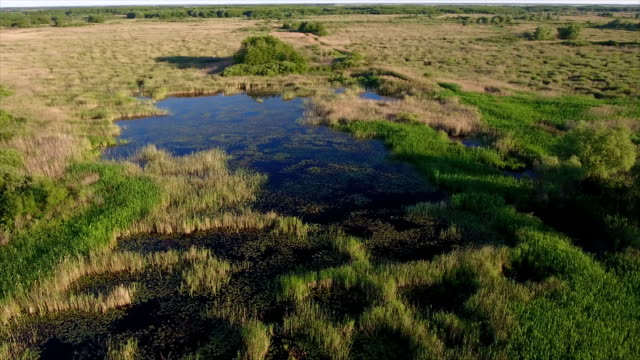 Aerial shot of some small square lakes and reedbeds in Ukraine in summer video