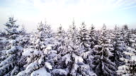 Aerial shot of the snowy spruce trees video