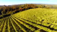 HD: Aerial Shot Of Vineyards In Autumn video