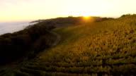 HD: Aerial Shot Of Viniferous Region video