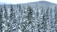 Aerial shot of whitened tree tops and a snowy path video