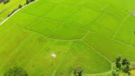 Aerial shot rice field and mountain view video