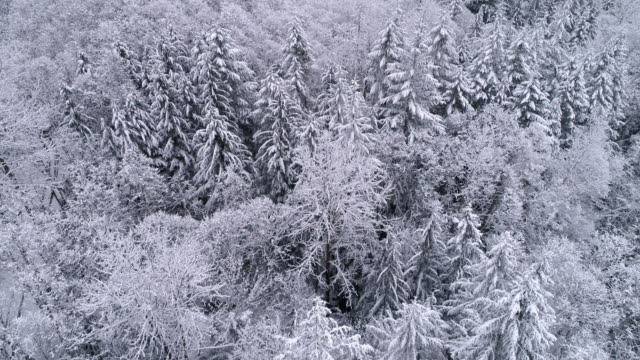 Aerial Shot with Snow Falling on Foggy Mountain Forest in Cold Winter Season video