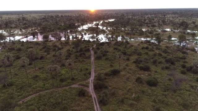 Aerial sunrise view over palm trees and waterways of the Okavango Delta video