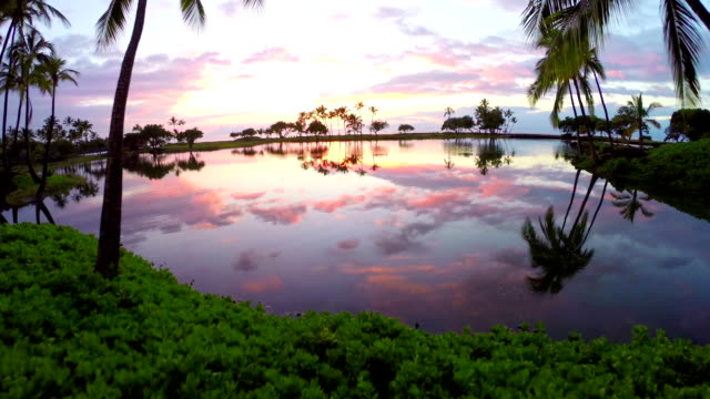Aerial Sunset in Hawaii Flying Through Palm Trees video