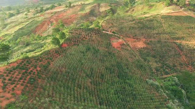 Aerial Survey Coffee plantations in Vietnam video