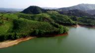 Aerial tea plantation video