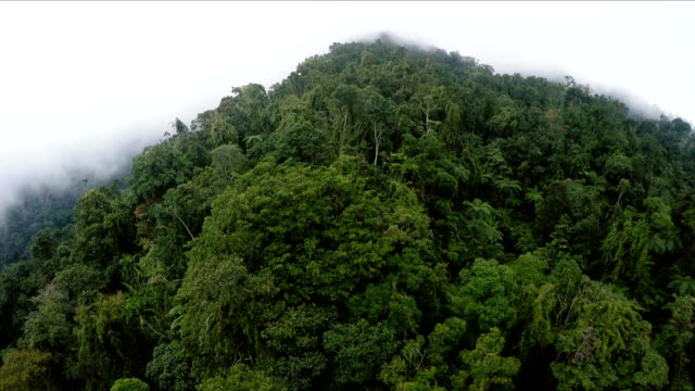 Aerial , the bird's-eye view of the jungle of morning mist video