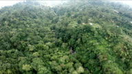 Aerial , the bird's-eye view of the jungle video