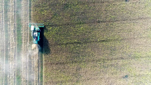Aerial: The combine cuts the harvest evenly. View from above. video