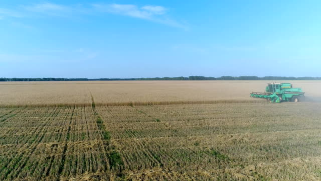 Aerial: The combine mows the golden wheat field. video