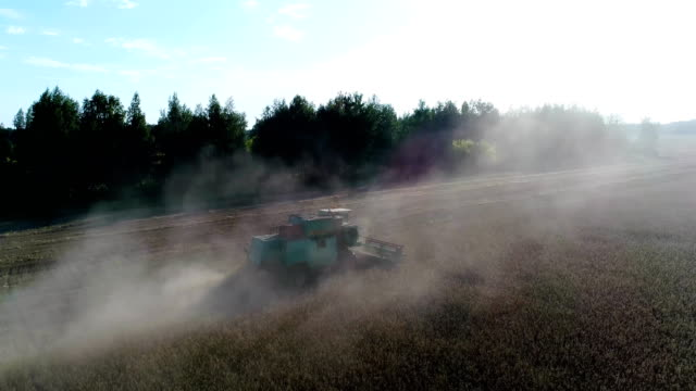 Aerial: The combine mows the wheat on the field next to the forest. video