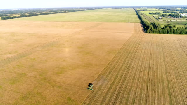 Aerial: The combine works on a wheat field. Harvesting. video