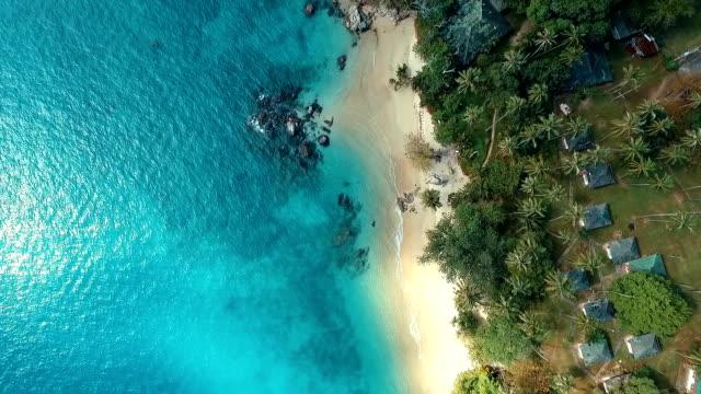 Aerial: The palm wild beach. video
