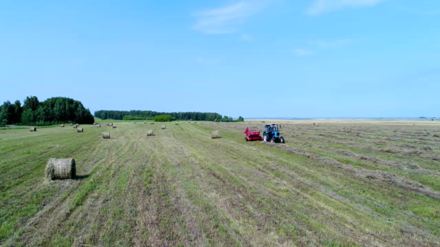 Aerial: The tractor collects hay and makes from it stacks on the field. video