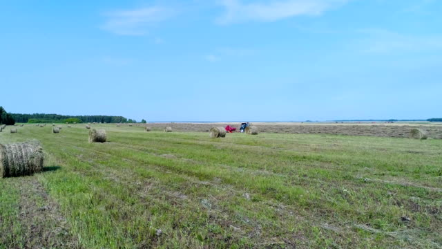 Aerial: The tractor rides through the field with stacks and collects hay. video