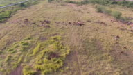 Aerial Top View of Cows on farm video