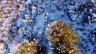 Aerial Video of Forestry and Forest Plantation Footage. video
