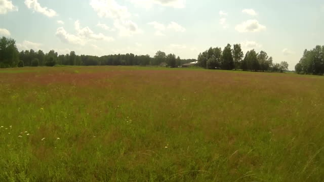 Aerial videoframe of summer red field and birds, sunny weather, russia video