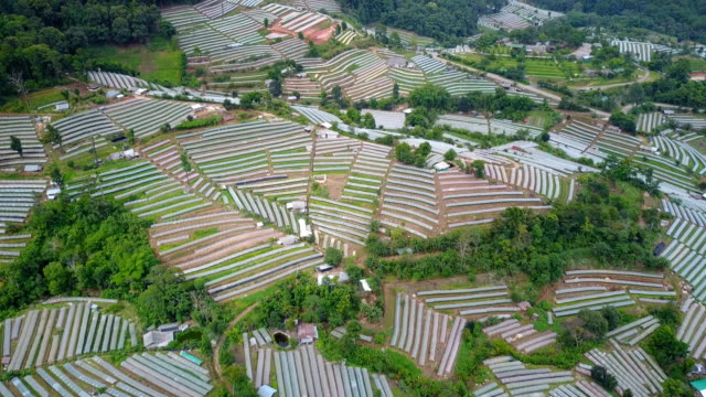 Aerial view beautiful terrace of agriculture farming plot with plastic wrap in northern of Thailand for agriculture farming concept. video