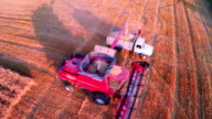 Aerial View Combine Harvester Gathers the Wheat video